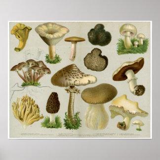 Hongos comestibles - setas y Toadstools Poster