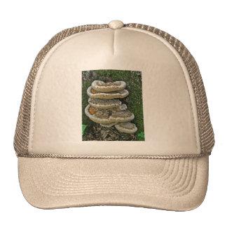 Hongos de estante en tocón gorras