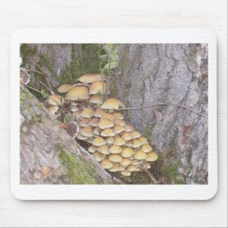 Hongos en árbol mouse pad