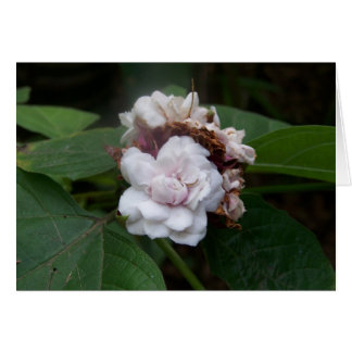 Honolulu Rose Card