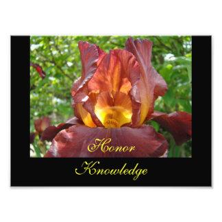 Honor Knowledge Teaching art prints Iris Flowers Photographic Print