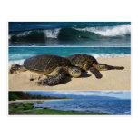 Honu, Hawaiian Green Sea Turtle, Oahu, North Shore Postcard