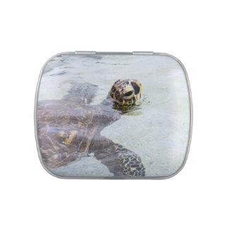 Honu Hawaiian Sea Turtle - Hawaii Turtles Jelly Belly Candy Tins