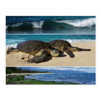 Honu, tortuga de mar verde hawaiana, Oahu, orilla Tarjetas Postales