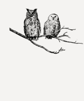 Hoo-Tee Owls Ladies Raglan Shirt