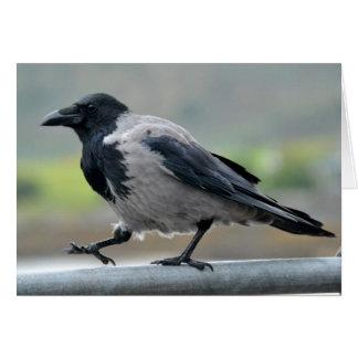 Hooded Crow Card