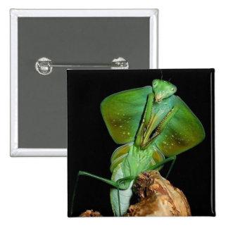 Hooded mantis pinback button