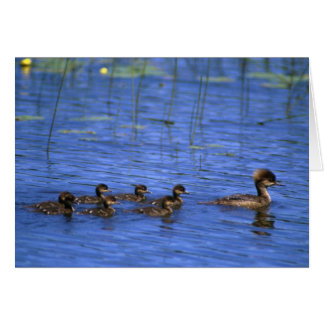 Hooded Merganser Brood Card