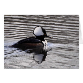 Hooded Merganser Drake Card