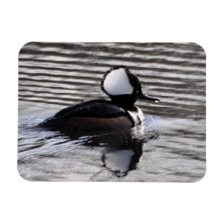 Hooded Merganser Drake Magnet