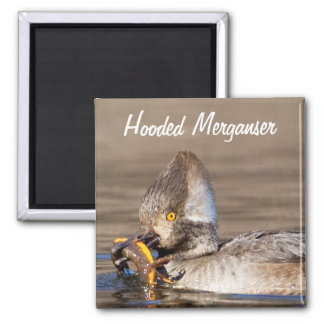 Hooded Merganser Duck catches Newt Magnet
