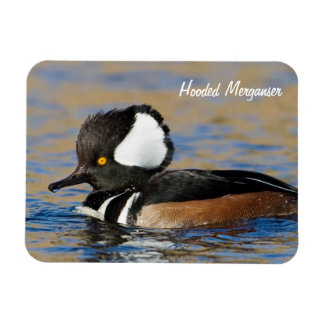 Hooded Merganser Duck Magnet