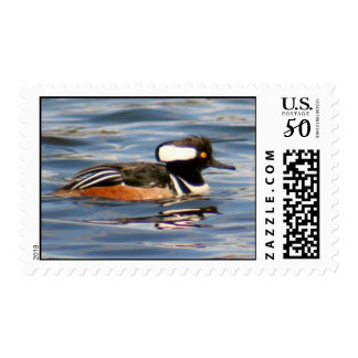 Hooded Merganser Duck Postage Stamp