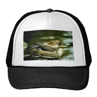 Hooded Merganser Hen Trucker Hat