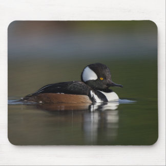 Hooded Merganser in evening light Mouse Pad