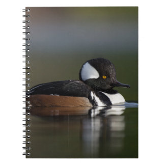 Hooded Merganser in evening light Notebook