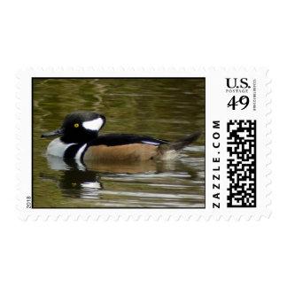 Hooded Merganser male stamp
