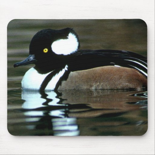 Hooded Merganser Mouse Pad