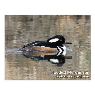 Hooded Merganser Postcard