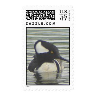 Hooded Merganser Stamp