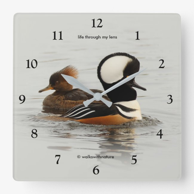Hooded Mergansers: A Finely Crested Couple