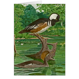 Hooded Mergansers Illustration Card
