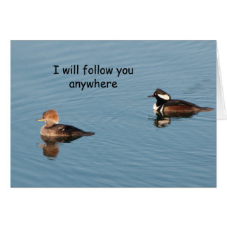 Hooded Mergansers Together - Frameable Art Card
