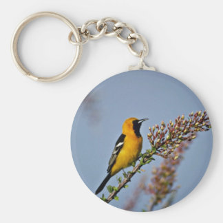 Hooded Oriole in Ocotillo Pink flowers Keychains