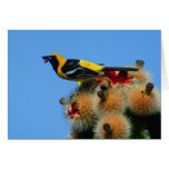 Hooded Oriole, male, eating cactus blossum Cards