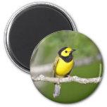 Hooded Warbler 2 Inch Round Magnet