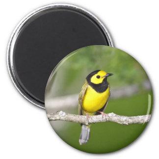 Hooded Warbler Fridge Magnet