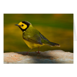 Hooded Warbler (Wilsonia Citrina) Adult Male Cards