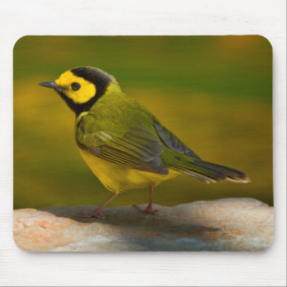 Hooded Warbler (Wilsonia Citrina) Adult Male Mouse Pad