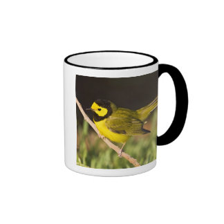 Hooded Warbler Wilsonia citrina) adult, male, Ringer Coffee Mug