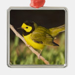Hooded Warbler Wilsonia citrina) adult, male, Square Metal Christmas Ornament