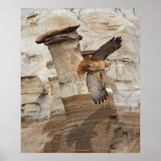 """""""Hoodoo Hawks"""" Wild-Birds Raptors Poster"""