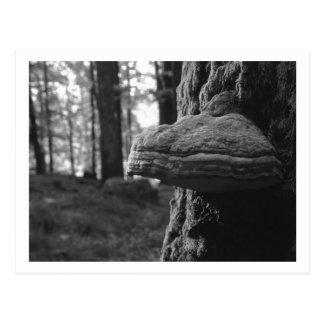 Hoof Fungus Postcard