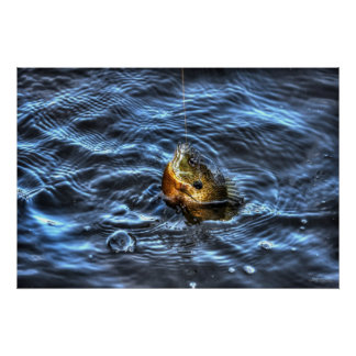 Hooked Bluegill Sun Fish Fisherman's Sporting Gift Poster