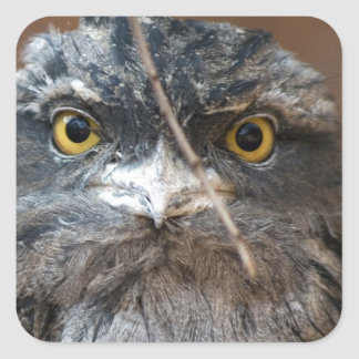 HOOO Are You? Square Sticker
