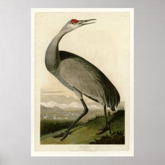 Hooping Crane Poster