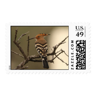 Hoopoe Postage Stamps