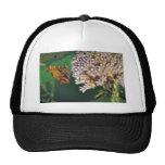 Hop merchant butterfly on Common milkweed Mesh Hats