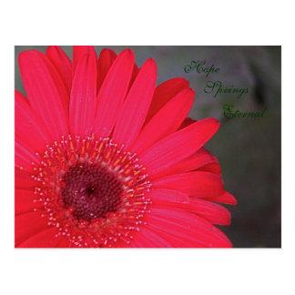 Hope Springs Eternal Postcard