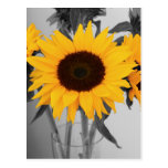 Hope Sunflower Postcard
