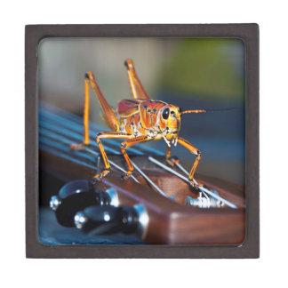 Hopper on a Headstock Medium Gift Box Premium Jewelry Box