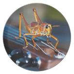 Hopper on a Headstock Melamine Plate