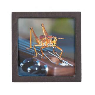 Hopper on a Headstock Small Gift Box Premium Trinket Boxes