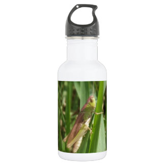 Hopper Stainless Steel Water Bottle