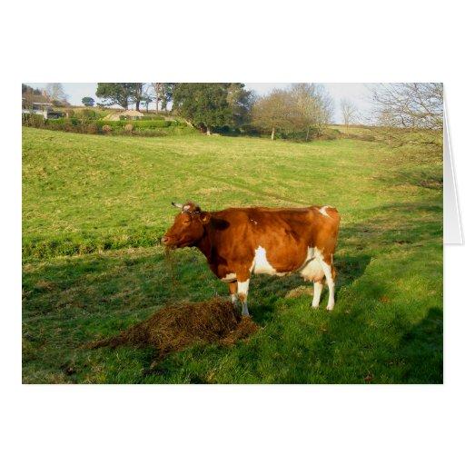 Hora de la comida para la vaca de Guernesey Tarjeta De Felicitación