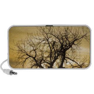 Hora de la magia del árbol de la luz de la puesta laptop altavoces